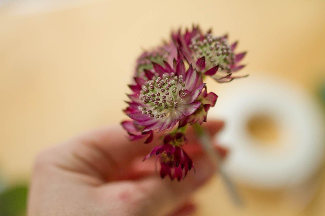 Torten Mit Echten Blumen Dekorieren Kuchen Miezen Back Blog