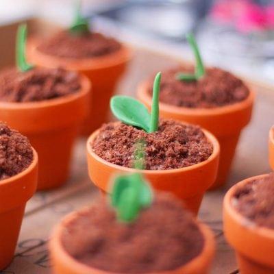 Küchen-Miezen · Back- & Foodblog · Rezept & Tutorial · Schokomuffins im Tontopf gebacken · mit kleiner Pflanzendeko